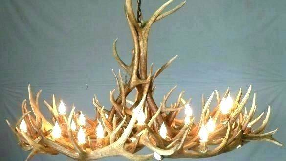 Best 25 Shed antlers ideas on Pinterest | Shed horn ideas, Ideas