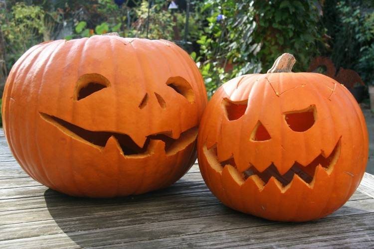 Creative Pumpkin Decorating Ideas Resume Simple Templates